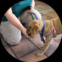 Staff with golden retriever puppy