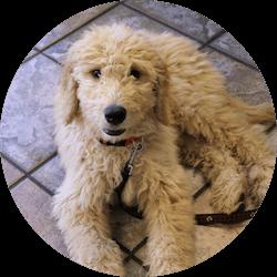 Happy dog on lobby floor